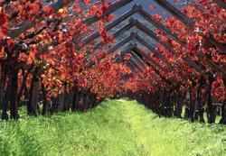winelands2