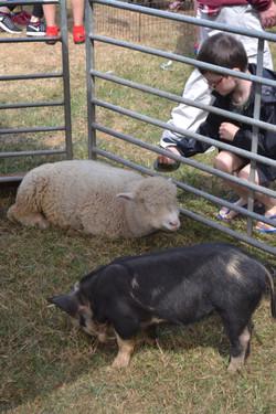 Don't be sheepish