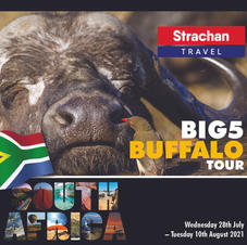 Buffalo Tour