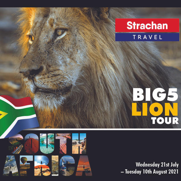 Lion Tour