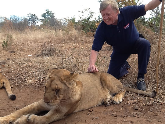 Jim with a Lion on one of our fabulous Lion Tours package