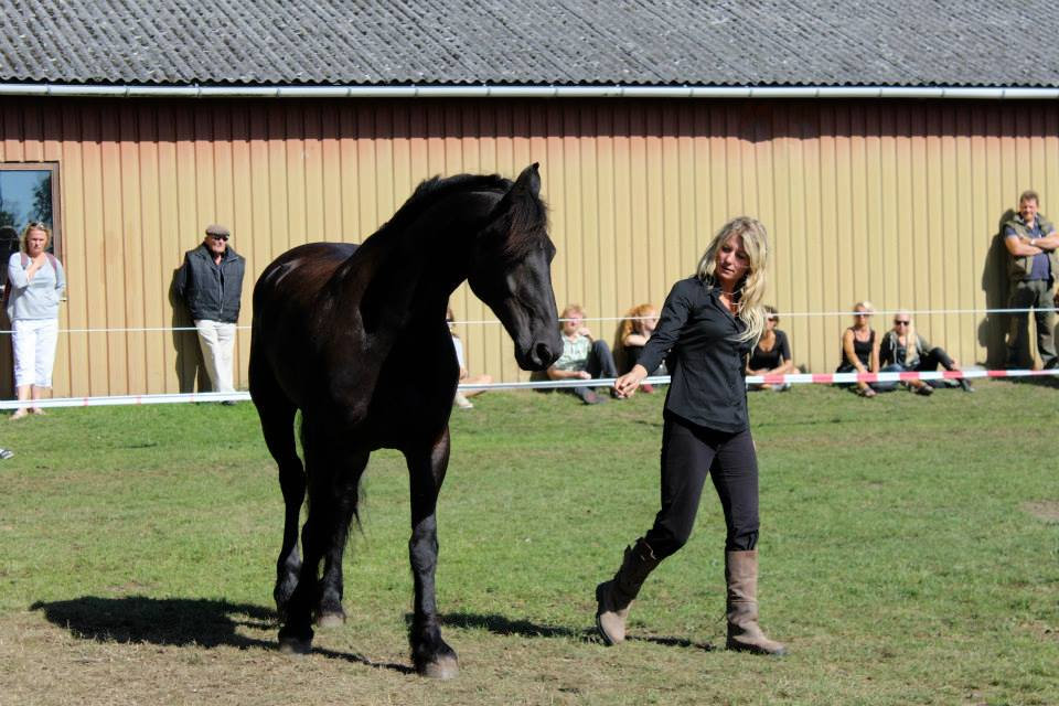 Weekendcourse - with horse