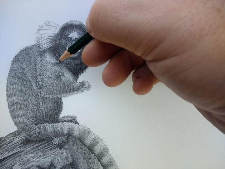 A hand adding some final touches to a pencil drawing of a monkey