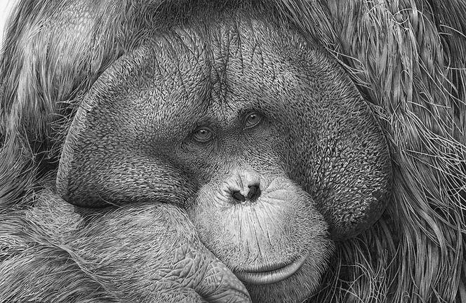Tuan, by David Dancey-Wood.jpg