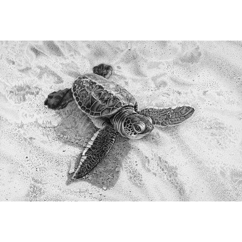 Close up of a young hatchling turtle walking across the sand