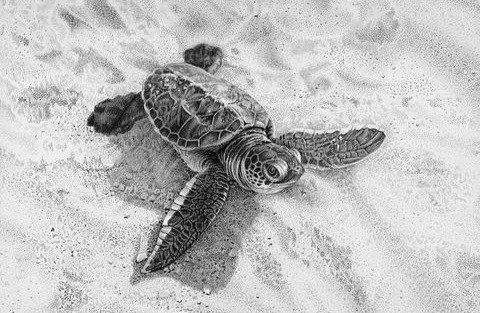 Pencil drawing of a turtle hatchling crossing the sand