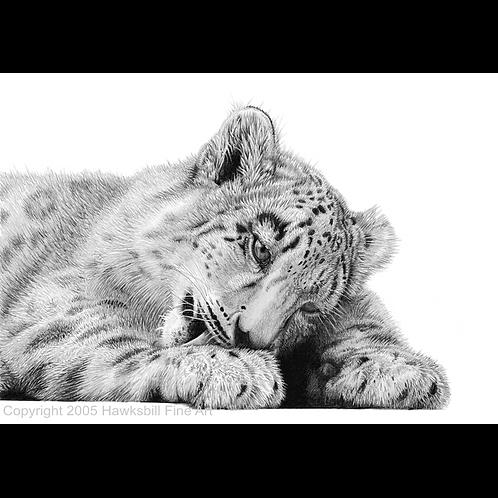 Portrait of a snow leopard cub licking it's paw