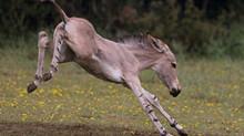 A flurry of foals