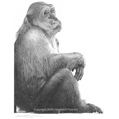 Ex laboratory Stump-tailed Macaque sitting outside in the sun for the first time