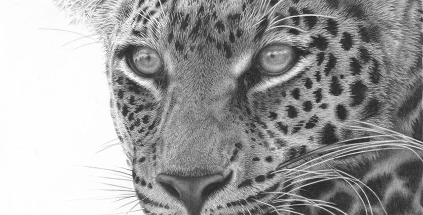 Masaai Leopard