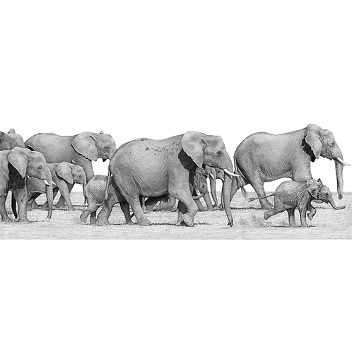 Family of elephants, mothers and calfs, running along left to right,