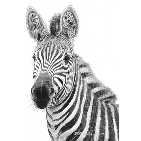 Old Curly (Zebra).png