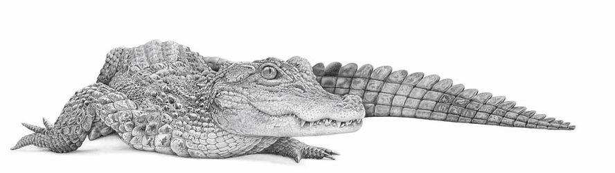 The Last Dragon, by David Dancey-Wood.jpg
