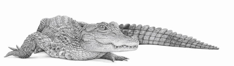 The Last Dragon, by David Dancey-Wood