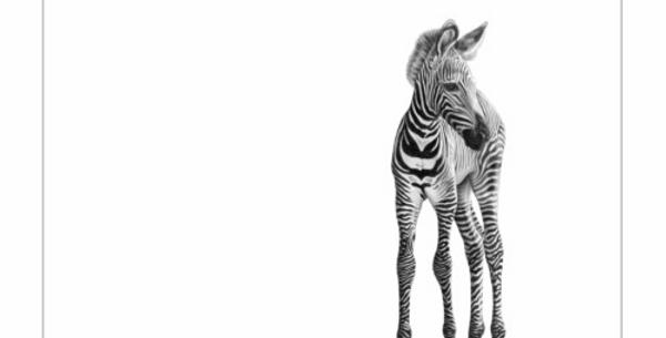 Novus Equus by David Dancey-Wood
