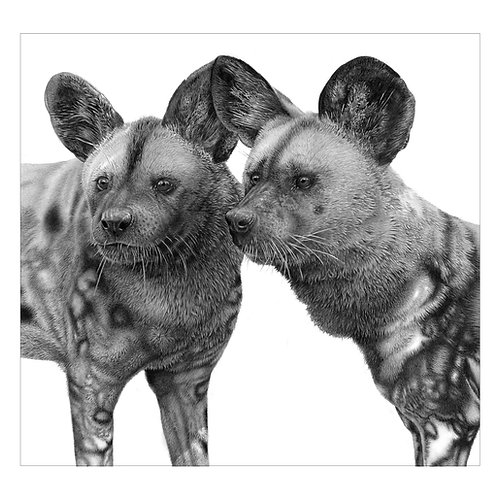 African Painted Dogs portrait