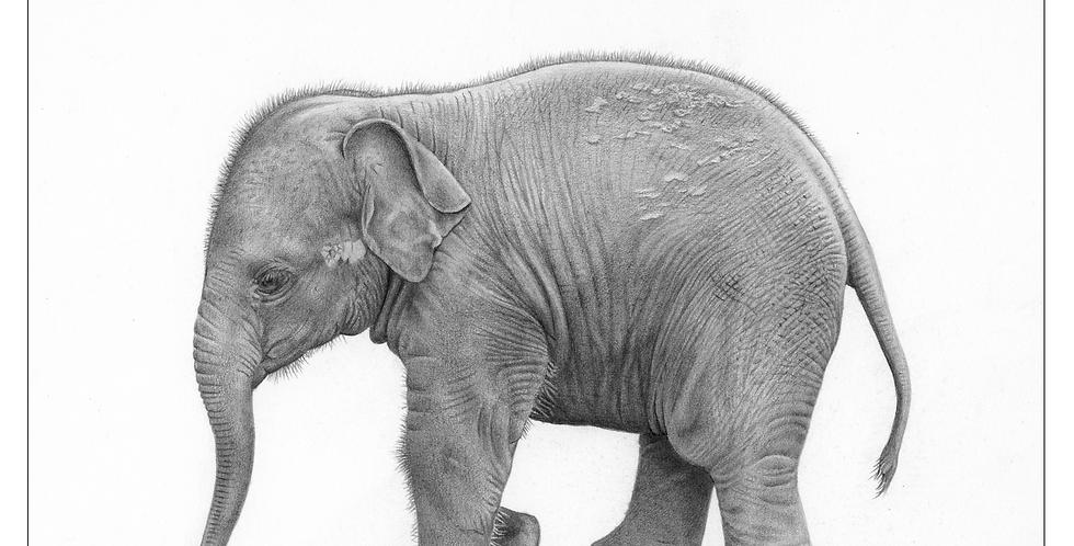 Little Tusker