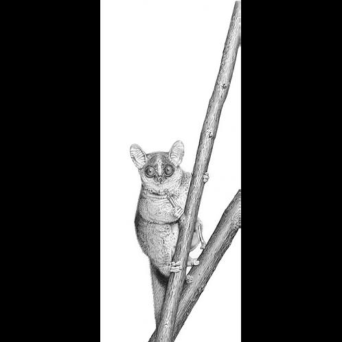 Bush Baby climbing a tree branch