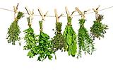 plantes séchées.png