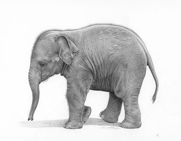 little tusker, by David Dancey-Wood.jpg