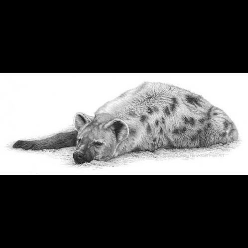 Dozing hyaena lying on the ground