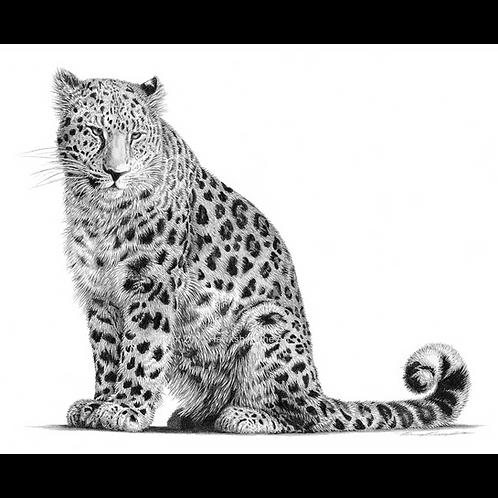 Amur Leopard, (Amur leopard drawing)