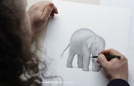 Pencil artist David Dancey-Wood drawing an elephant