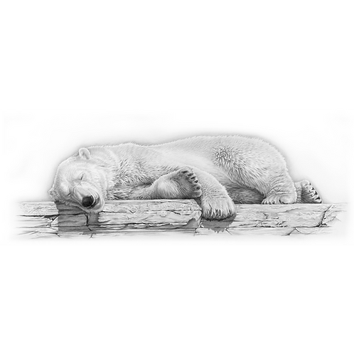 Polar Bear laying down sleeping on a rock