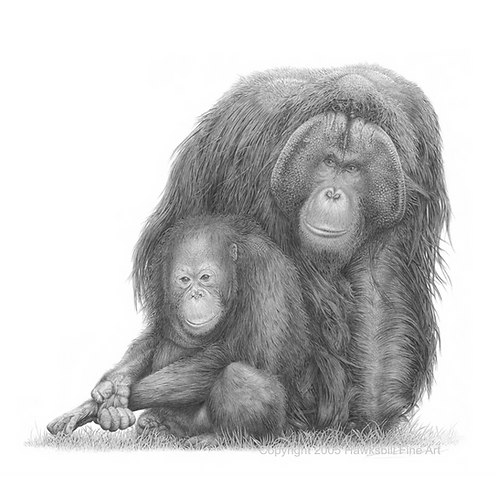 Adult male orangutan and sitting youth orangutan
