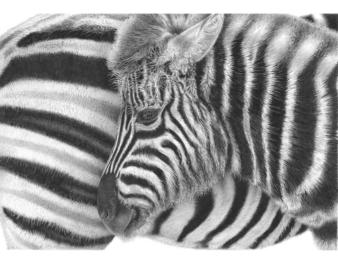 'Black and White' by David Dancey-Wood