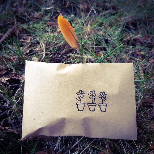 Wildflower Seeds - Little packets of joy