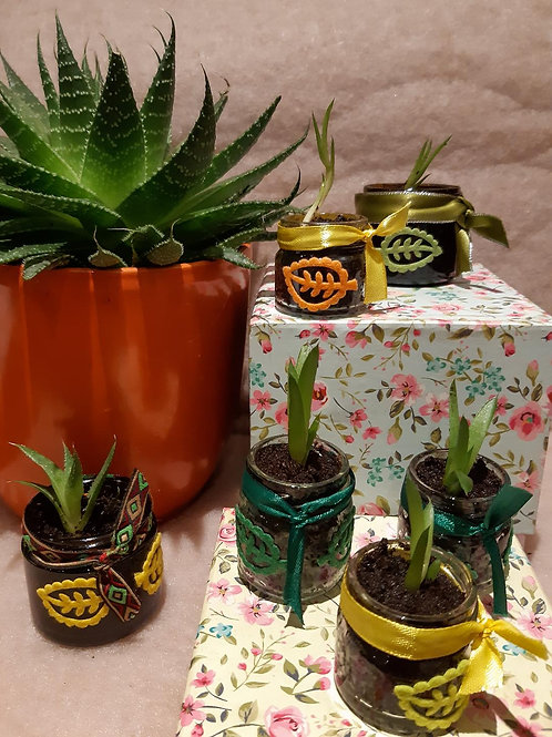 Baby Aloe Vera plants - Collection only
