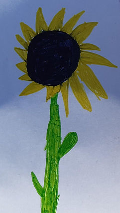 Ambers sunflower.jpg