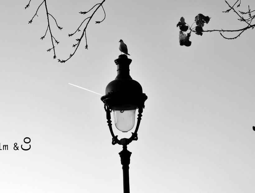 Oiseau perché