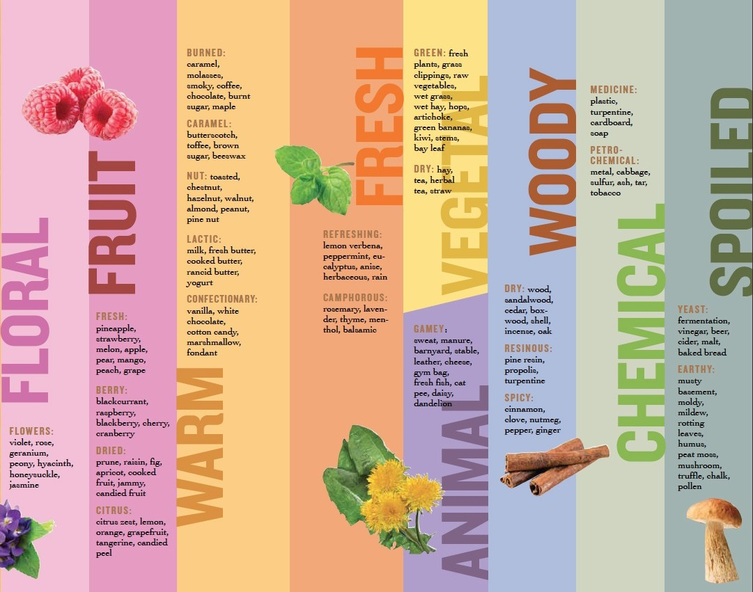 Honey: Different Flowers, Different Flavors