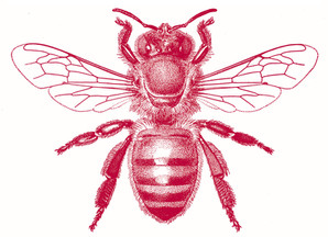 It's National Honeybee Day but we're not Celebrating!