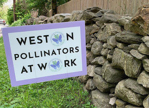National Pollinator Day is June 22-28