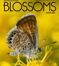 2 Million Blossoms - Tasting the Terroir of Honey                         by C. Marina Marchese