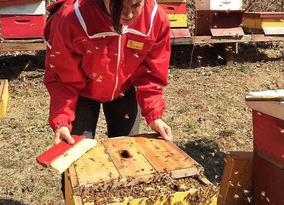 Beekeeping Workshop • Wilton Continuing Education