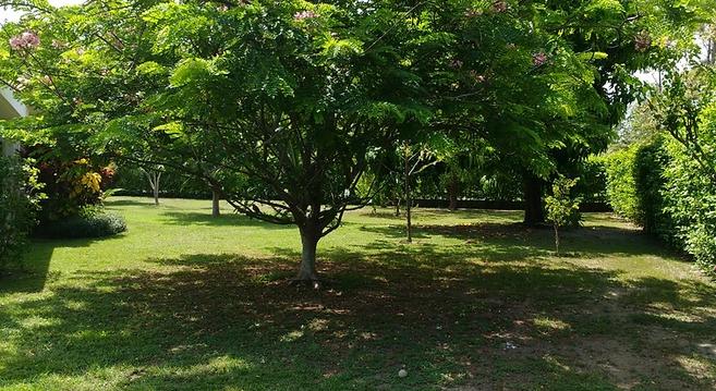 park.webp