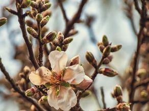 La gemmothérapie : miser sur les bourgeons pour préserver sa santé !