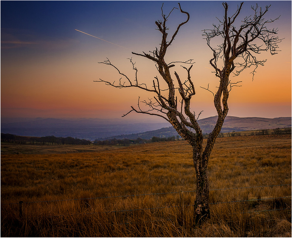 PDI - Lonely Tree by Liam Sheppard (9 marks)