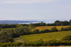mornington peninsula private tour