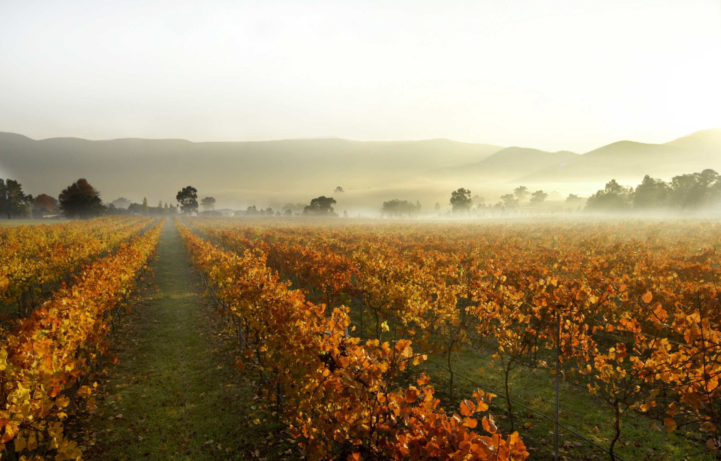 hunter valley wine tours