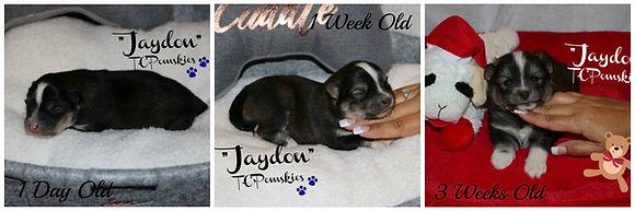 Jaydon collage .jpg