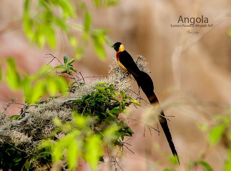 2018-05-20 Angola (POW) 23 9C2A3416.jpg