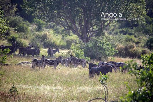2018-05-20 Angola (POW) 38 9C2A3676.jpg