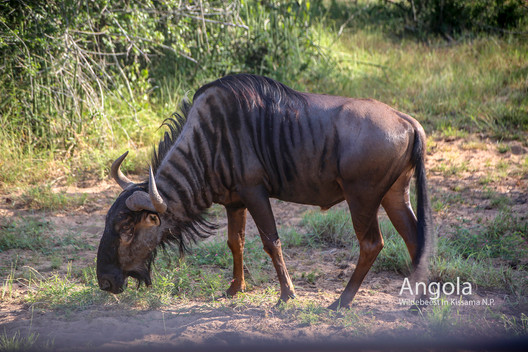 2018-05-20 Angola (POW) 39 9C2A3759.jpg