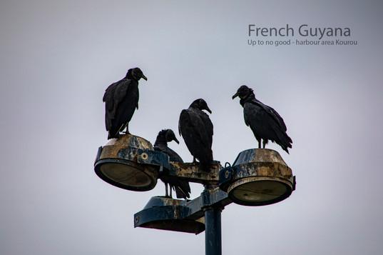 2019-05-15 French Guyana POW (19) 452A67