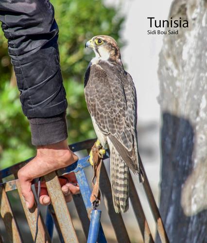 2018-12-21 Tunisia 16 POW 452A5395.jpg